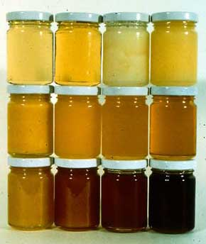 12 COLOURS OF HONEY